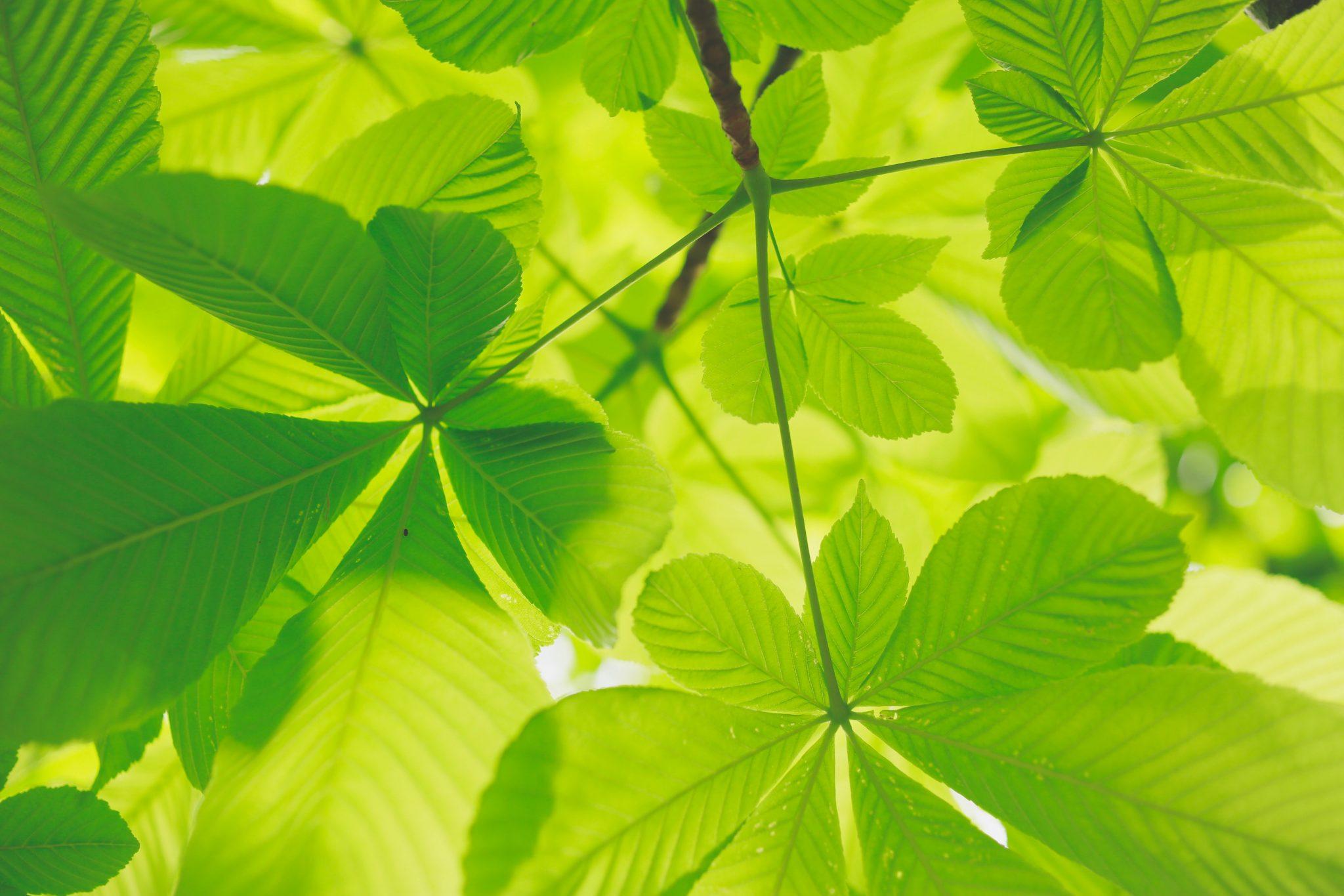 Protégé: 5 actions eco-responsables